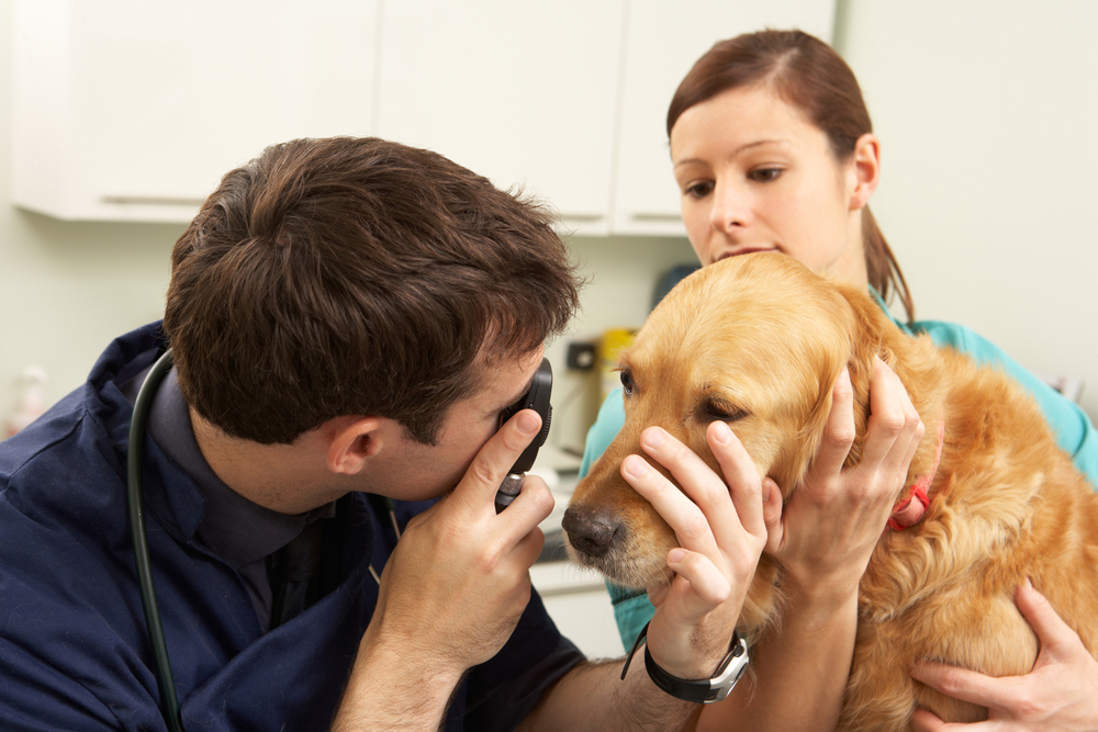 Dog receiving a preventative Wellness Exam with a Veterinarian in Durham & Chapel Hill