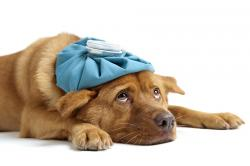 sick_dog_with_flu_laying_down