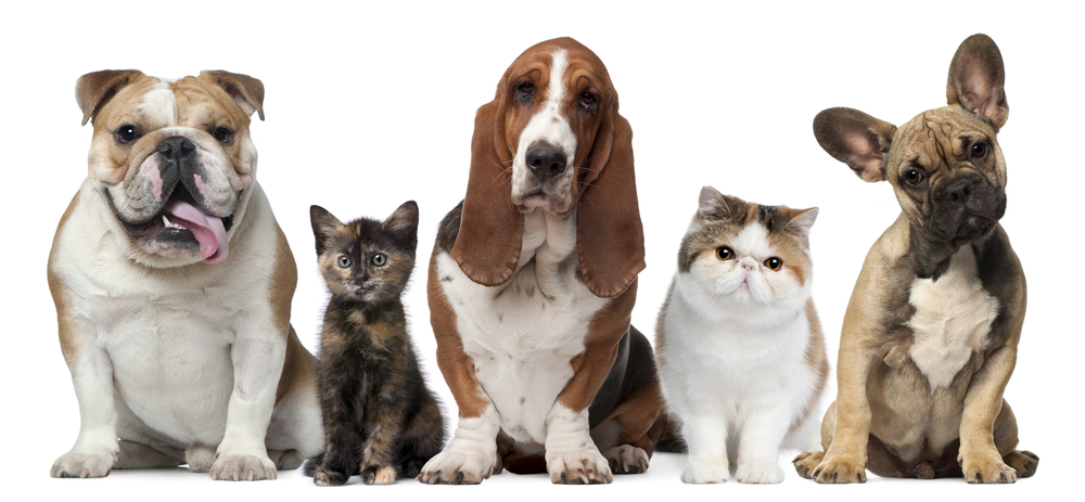 New Hope Animal Hospital, Chapel Hill Veterinarian in Durham does Spay or Neuter for cats & dogs. sterilization procedures reduce possibility illnesses